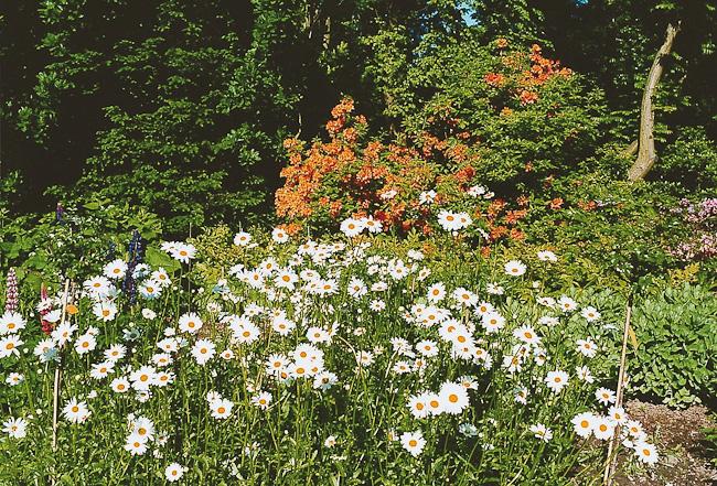 Pflege ihres Hausgartens
